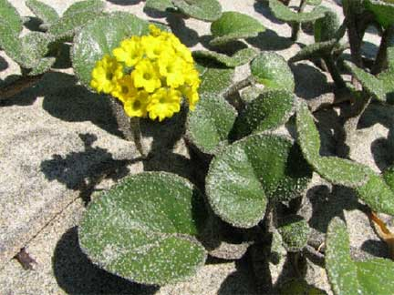 Yellow flowers mightylinksfo Choice Image